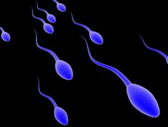 (g)	Surgical Sperm Retrieval and Freezing (MESA / TESA)